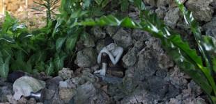 よっちゃんこと吉武正博さんの写真。美しいよね。